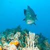Bahama_Banks_2005-02-0515