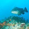 Bahama_Banks_2005-02-0514