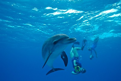 Underwater filming with Denise Herzing of the Wild Dolphin Project, Bahamas
