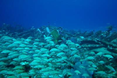 Swiming with a school of fish near the Bahamas