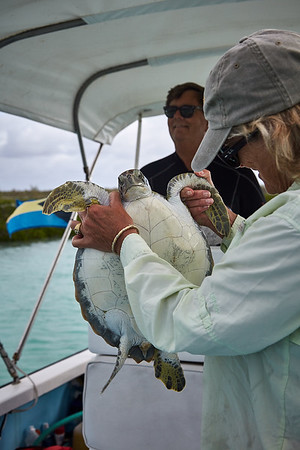 One of the smaller turtles captured for tagging