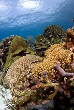 Bonaire 444-1