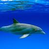 dolphinsnew3
