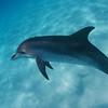 DSC_0118Todd Dolphin