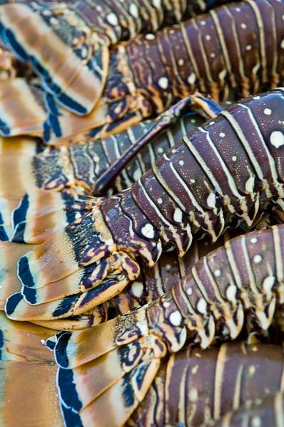 Mayaguana, Bahamas Bonefishing - Jim Klug Photos