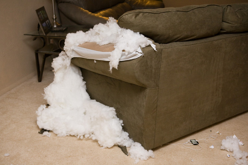 Bailey's favorite thing to chew on is anything soft.  Blankets, stuffed toys, bedding, towels, etc.<br /> <br /> He found out there is stuffing in the couch!  Guess he found something to bypass his time.