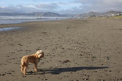 Morro Bay Dog Park