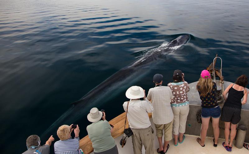 Fin Whale next to the Shogun