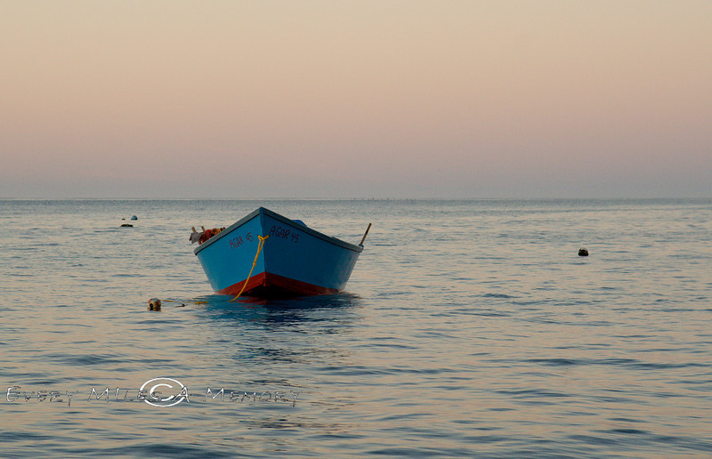 Lone panga sitting in the early morning light