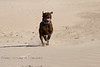 Luca in a full sprint towards me with the camera - Guerrero Negro Sand Dunes - Baja California