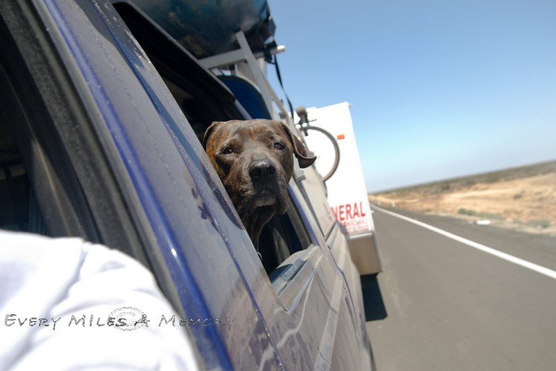 Our Backseat Co-Pilot Luca -  Enjoying the Warm weather of Baja