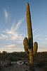 Giant Saguaro In the Sunrise Light - Catavina Boulder Fields Catavina Mexico - Photo by Pat Bonish