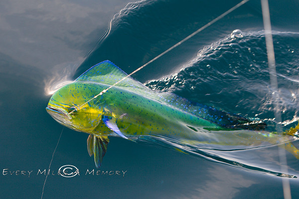 Congo's Awesome Sportfishing Charter - East Cape, Los Barriles, Baja California Sur, Mexico