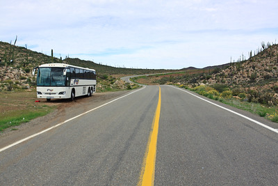 Baja Whale Trip 2013