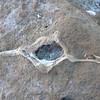 Fossils on Isla San Jose