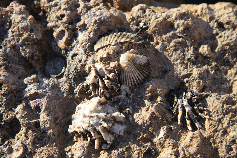 Fossils on Isla San Jose