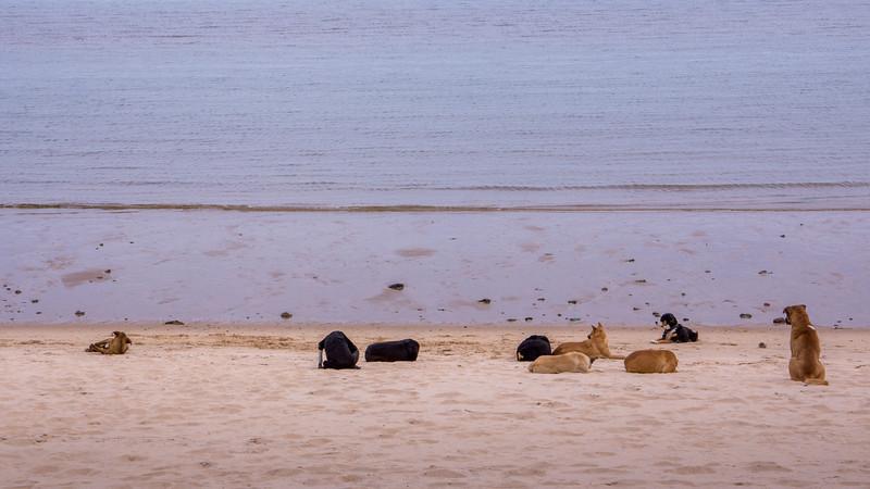 San Felipe beach dogs