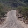 Burro near San Javier, Mexico BCS