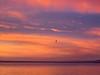 Pelican in Flight at Sunrise