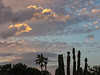 Flowering Cacti and Palm Tree Under Sunset-Colored Clouds