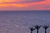 Three Palms Overlooking Sea of Cortez