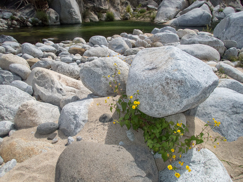 Desert Flowers, Granite Rocks, and Pool of Water