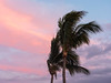 Blowing Palm Trees and Sunset-Colored Clouds