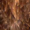 Bald Eagle Adult Chest Feathers Detail
