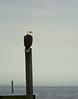 Birds-BaldEagletheWatch