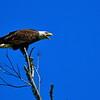 Eagle Complaint