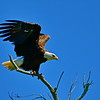 Eagle Wings-Up