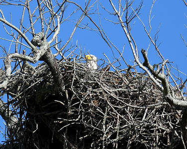 Their nest was the size of a VW beetle! Huge!