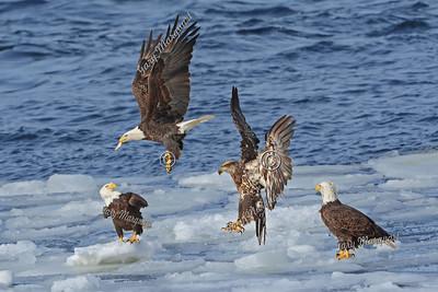 Eagle 7619