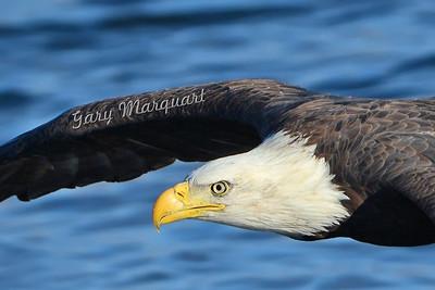 Eagle 0720