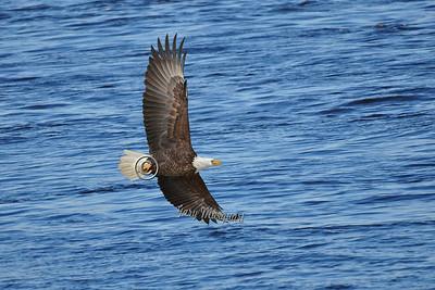 Eagle 6984