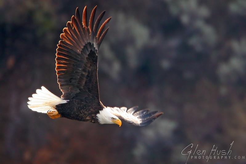 Eagle125_12x18