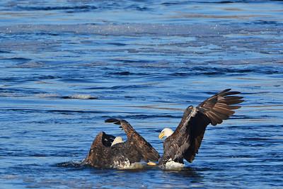 Eagle 2482
