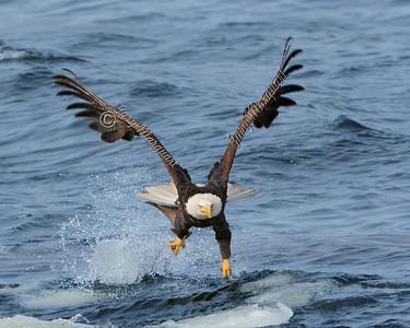 Eagle 5746
