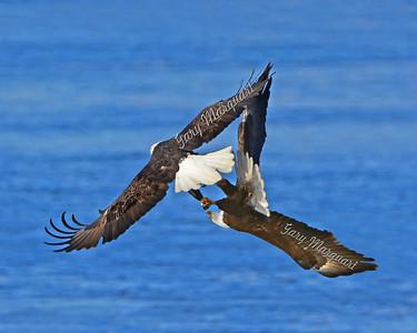 Eagles 2757