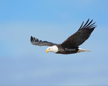 Eagle  2300