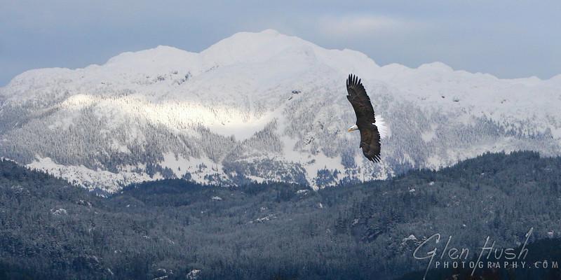 Eagle315_10x20