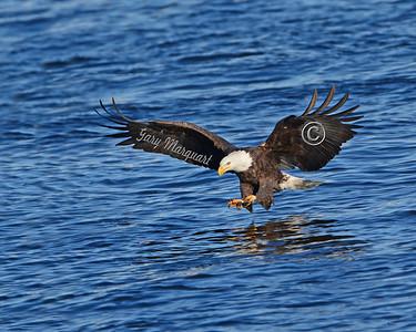 Eagle # 3903