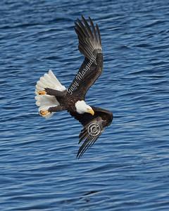 Eagle  #5657