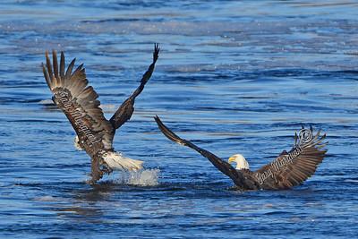 Eagle 2485