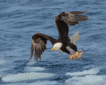 Eagle 5753