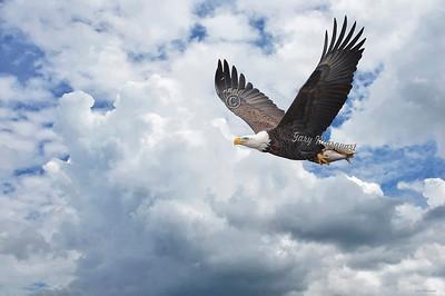 Eagle 0141