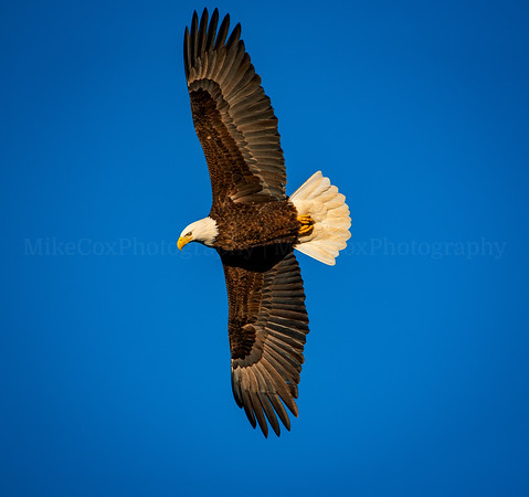 Soaring Eagle 1220