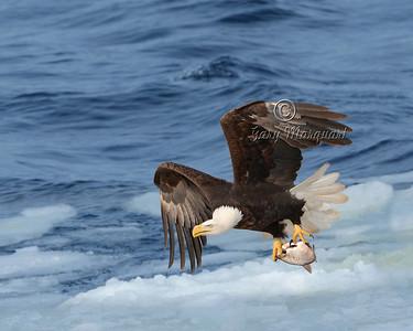 Eagle 5756