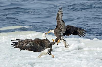 Eagle 4558