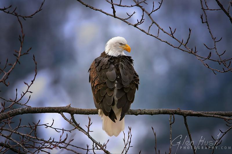 Eagle120_24x36